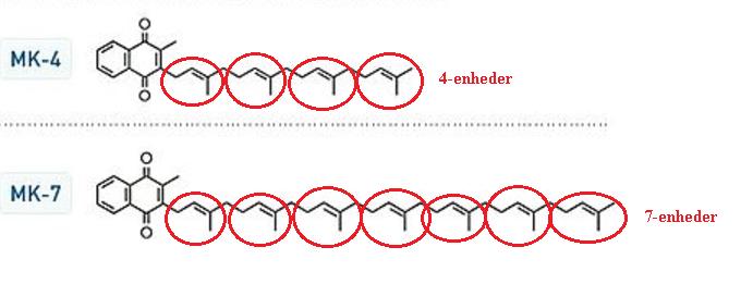 """Forskellen mellem MK-4 og MK-7 ligger i strukturen af stoffet. MK-4 har kun 4 """"Isopren' enheder hvorimod MK-7 har 7 enheder."""